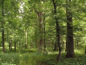 Kodėl verta pirkti mišką?